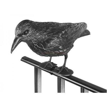 Obrázek Krkavec odstrašující ptáky