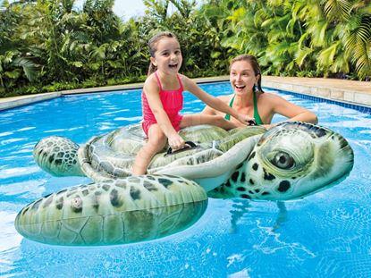 Obrázek Plovoucí mořská želva