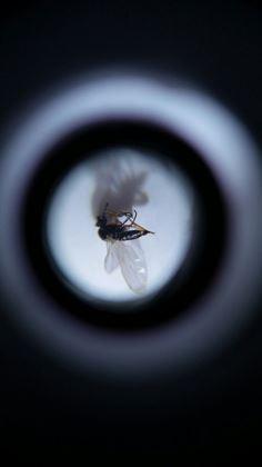 Obrázek z Kapesní mikroskop