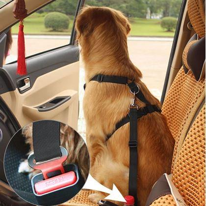 pas do auta pro psa